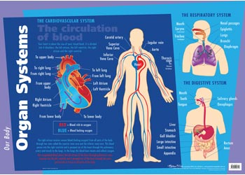 Human anatomy science organs systems chart science posters charts ccuart Images