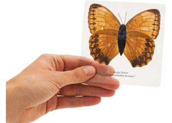 Laminated Butterflies – Set of 10