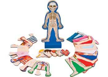 M&D – Human Body Magnetic Dress-Up