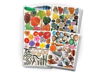 Nature Paper Pop Outs – 854 Pieces