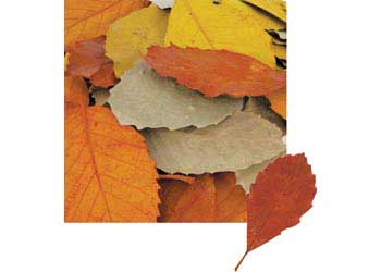 Natural Leaves – 90 pieces