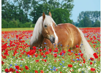 Ravensburger - Horse in the Poppy Field Puzzle 500 pieces