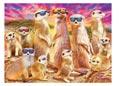 Poster Cool Meerkats