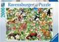 Ravensburger - Jungle Puzzle 2000pc