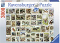Ravensburger - Animal Stamps Puzzle 3000 pieces